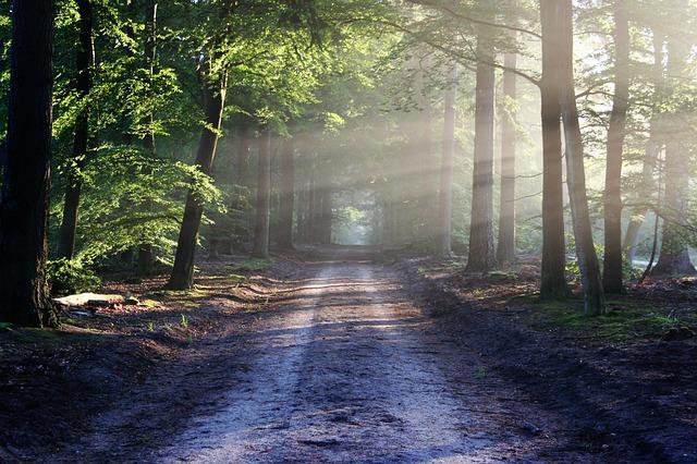 Prendre le chemin qui vous correspond vers votre projet professionnel